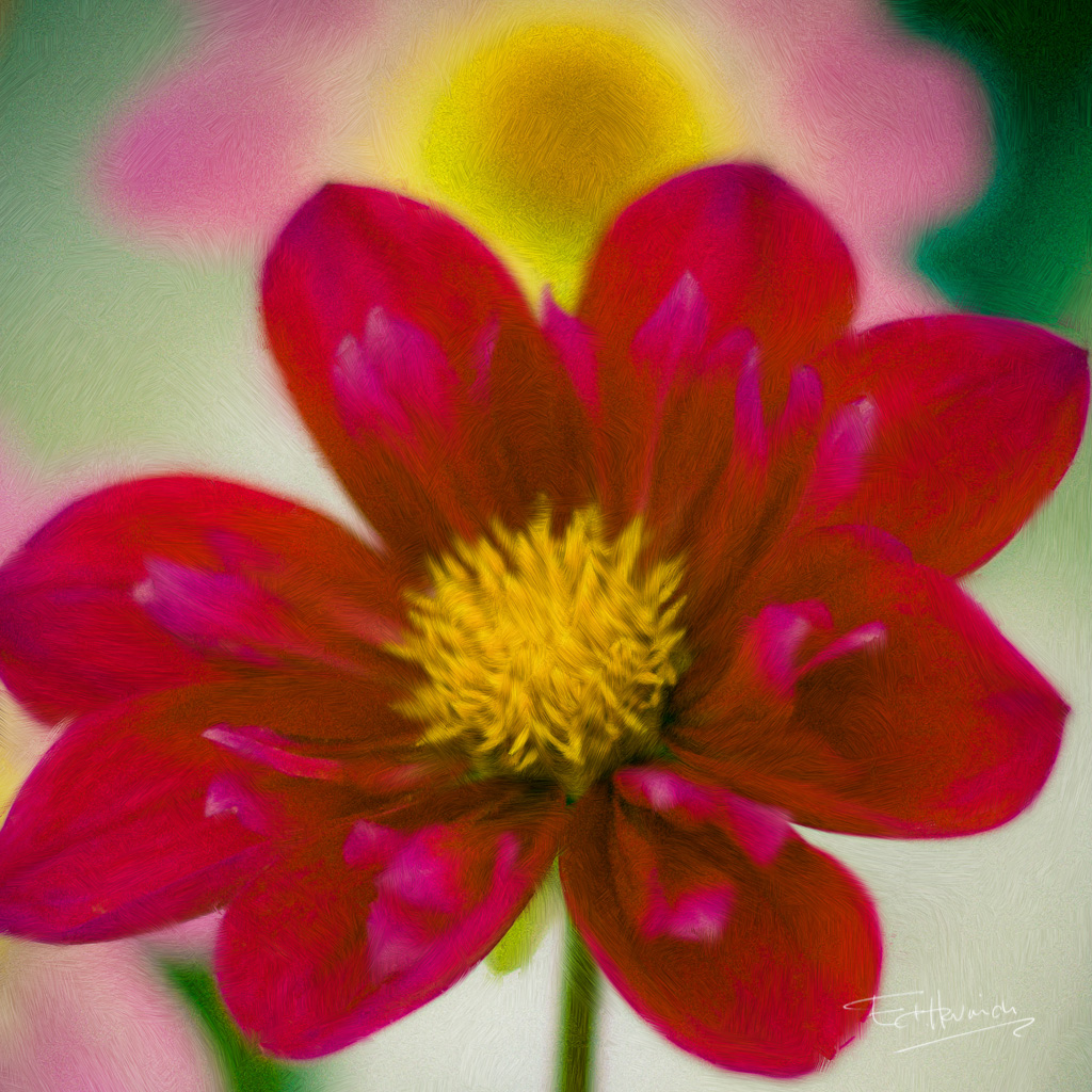 "<span class=""dojodigital_toggle_title"">Red Daisy</span>"